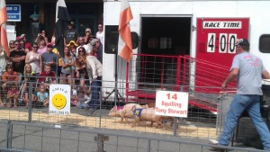 Pig Races at the Frisco BBQ Festival